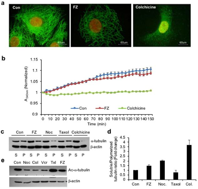 Fenbendazole acts as a moderate microtubule destabilizing agent and causes cancer cell death by modulating multiple cellular pathways